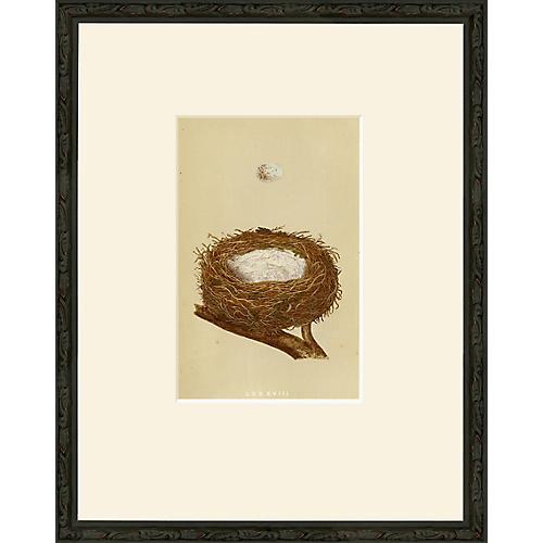 LXX - Feather Nest