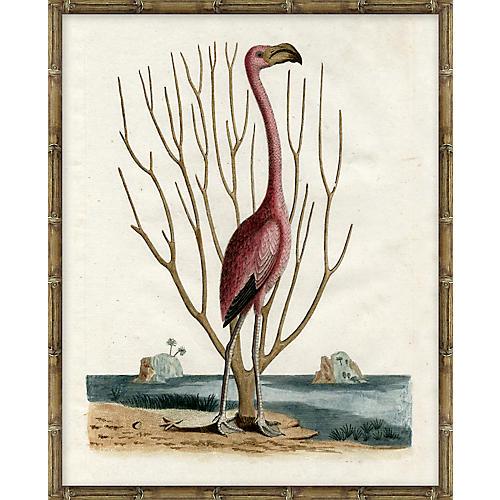 Flamingo Stride