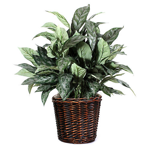 "30"" Silver Queen Plant w/ Basket, Faux"