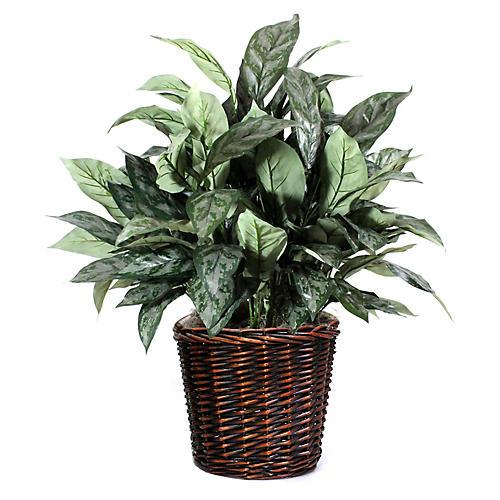"30"" Silver Queen Plant w/ Basket, Faux"