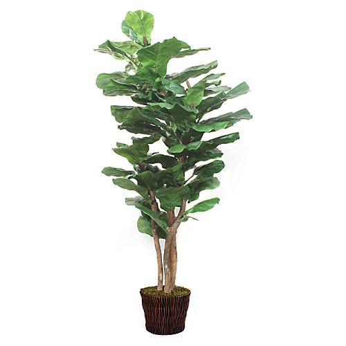"72"" Fiddle-Leaf Fig w/ Basket, Faux"