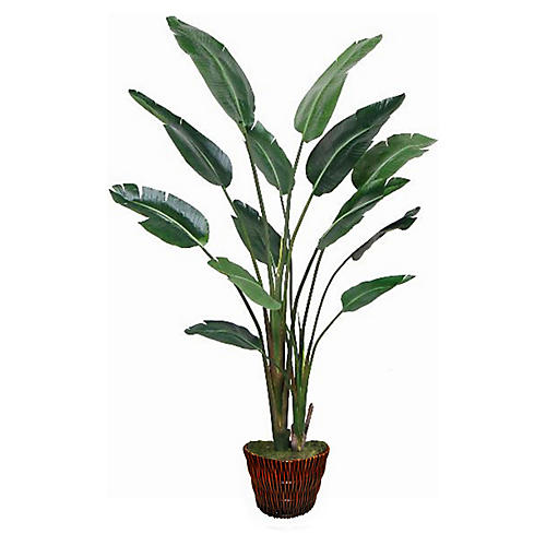 Travelers Palm w/ Basket Planter, Faux