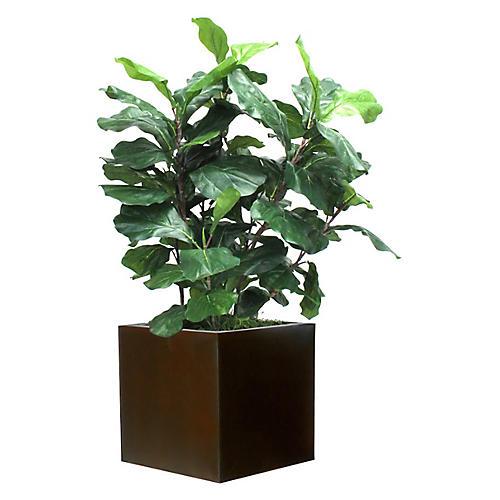 "36"" Fiddle-Leaf Fig w/ Cube Planter, Faux"