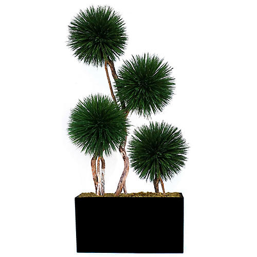 "96"" Dracaena w/ Rectangular Vessel, Preserved"