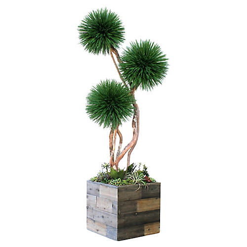 "96"" Pom-Pom Tree w/ Square Planter, Preserved"