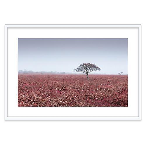 James Ogilvy, Red Field