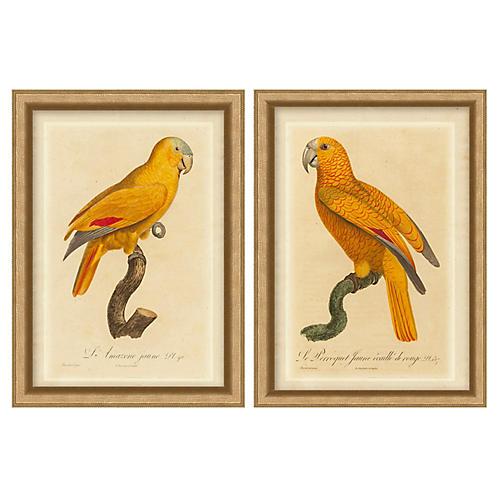 Orange Parrot Set of 2