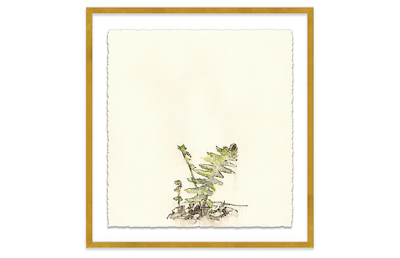 Mary H. Case, Botanical III