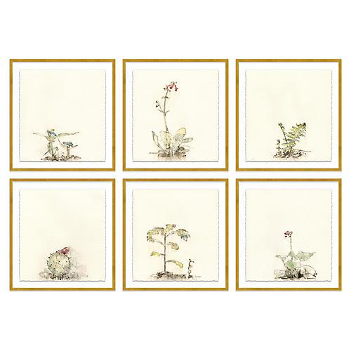Mary H. Case, Botanical S/6