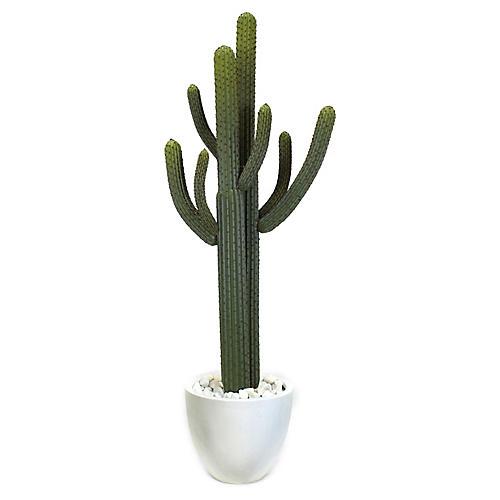 "70"" Thorny Cactus w/ Pot, Faux"