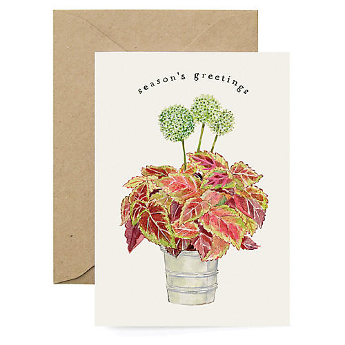 S/8 Holiday Coleus Boxed Cards