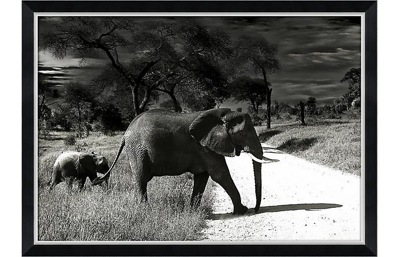 Black & White Elephant Family