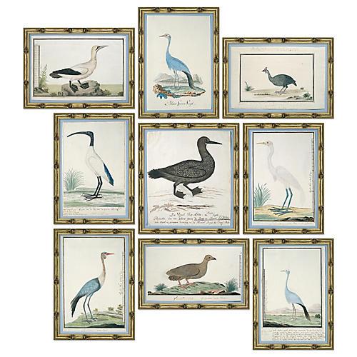 S/9 Bird Studies