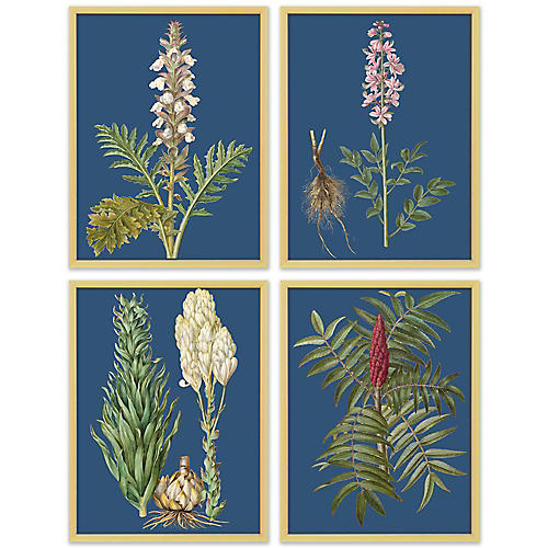 S/4 Navy Flower Lithographs