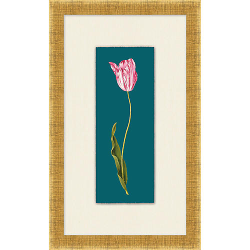 Lillian August, Royal Tulip I