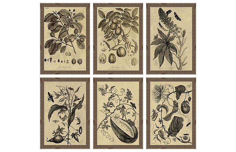 Lauren Liess, Studies in Nature Set