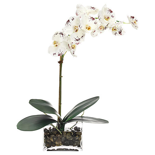 """24"""" Phalaenopsis Orchid in Rectangle Vase, Faux"""