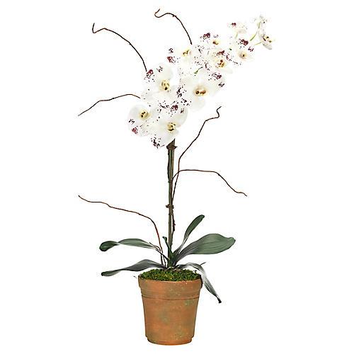 "21"" Phalaenopsis Orchd in Terracotta Pot, Faux"