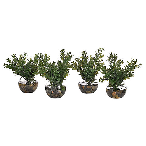 S/4 Boxwood in Bubble Vase, Faux