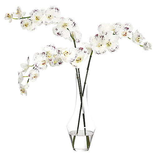 "30"" Phalaenopsis Orchid in Flared Flute, Faux"