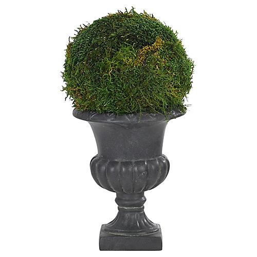 "7"" Moss Ball in Pedestal Urn, Preserved"
