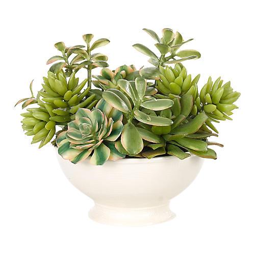 """8"""" Succulent in Bowl, Faux"""