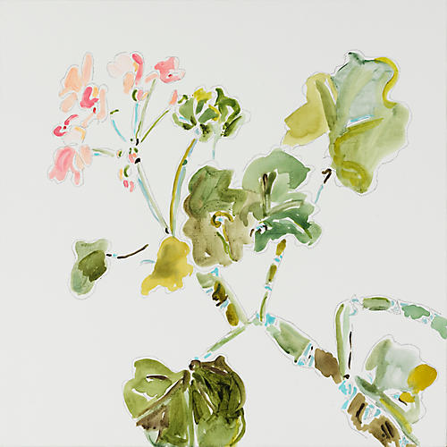 Geranium, Kate Lewis
