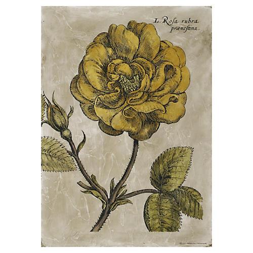 Melissa Van Hise, Rose Fresco IV