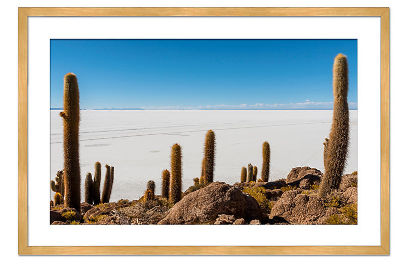 Richard Silver, Cactus Island