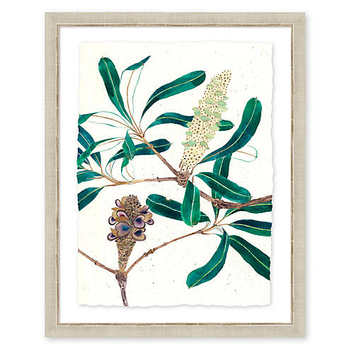Gabby Malpas, Banksia II