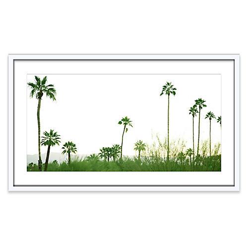 Palmscape, Amy Neunsinger