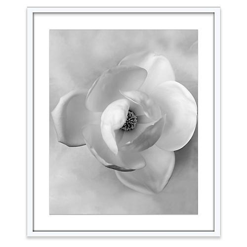 Wedding Magnolia, Amy Neunsinger