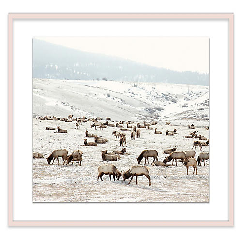 Christine Flynn, Elk Battle