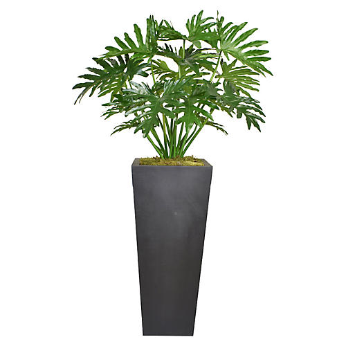 """68"""" Philodendron Tree, Faux"""