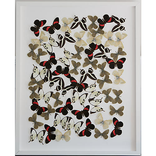 Dawn Wolfe, Butterfly & Moth Cutouts