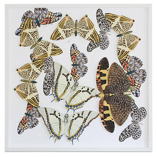 Dawn Wolfe, Moths & Butterflies: Brown
