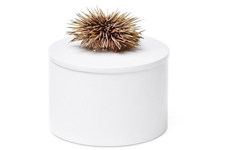 Round White Box w/ Sea Urchin