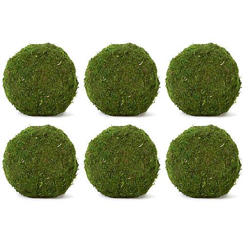 """S/6 6"""" Moss Balls, Dried"""