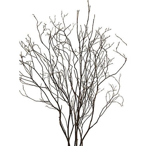 S/6 Mountain-Laurel Branches, Dried