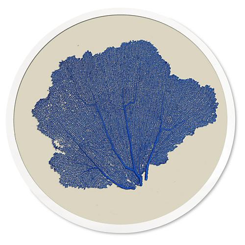 Round Sea Fan, China Blue