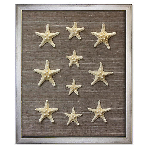 Framed Knobby Starfish, Brown