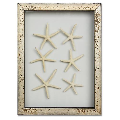 Framed Mini Starfish IV