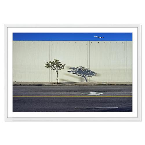 Jeff Seltzer, Plane, Tree & Shadow