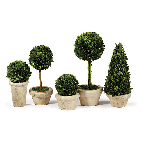S/5 Preserved Topiaries in Planter