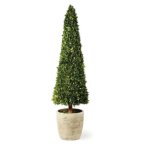 Cone Preserved Topiary, Green/Gray