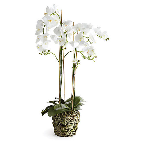 "44"" Phalaenopsis Arrangement, Faux"
