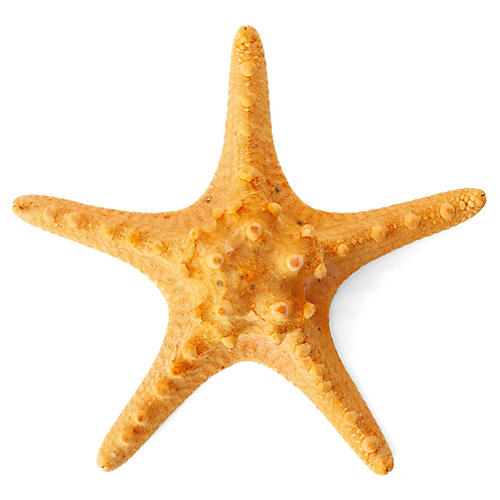 "6"" Knobby Starfish, Orange"