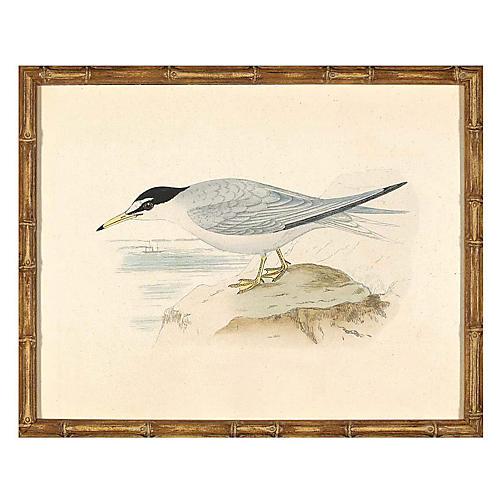 Sea Bird III