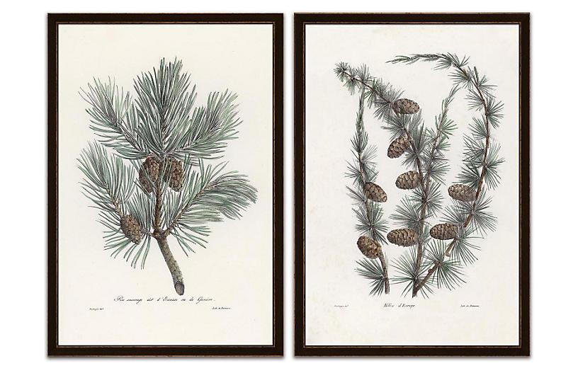 Pine Tree With Pinecones