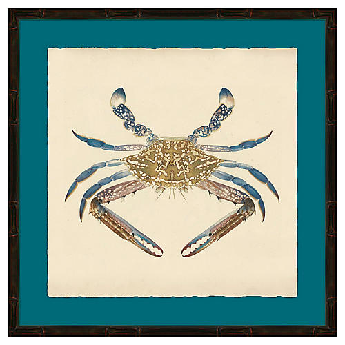 Blue Crab in Black Frame